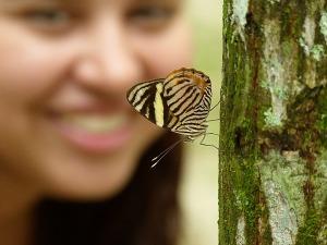 butterfly-314388