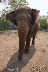 thailand-997412_1920